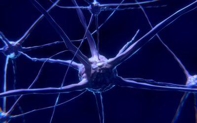 Det parasympatiske nervesystem